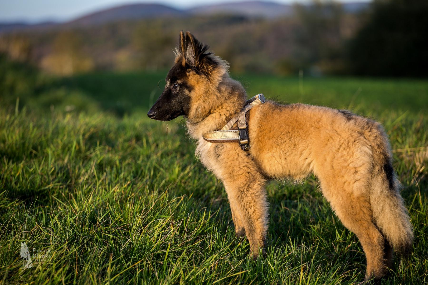 Omero-auf-der-Hundewiese2_IMG_4614-klein